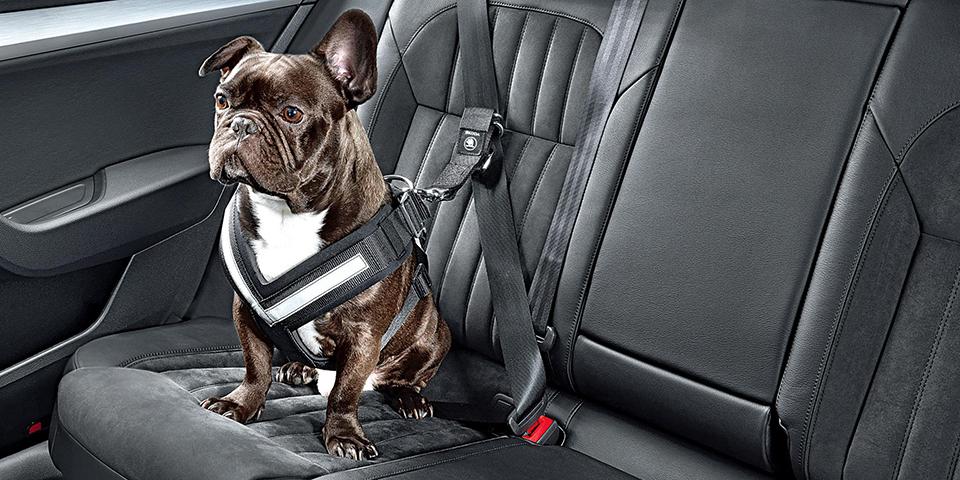 Dog seat belt 600x300