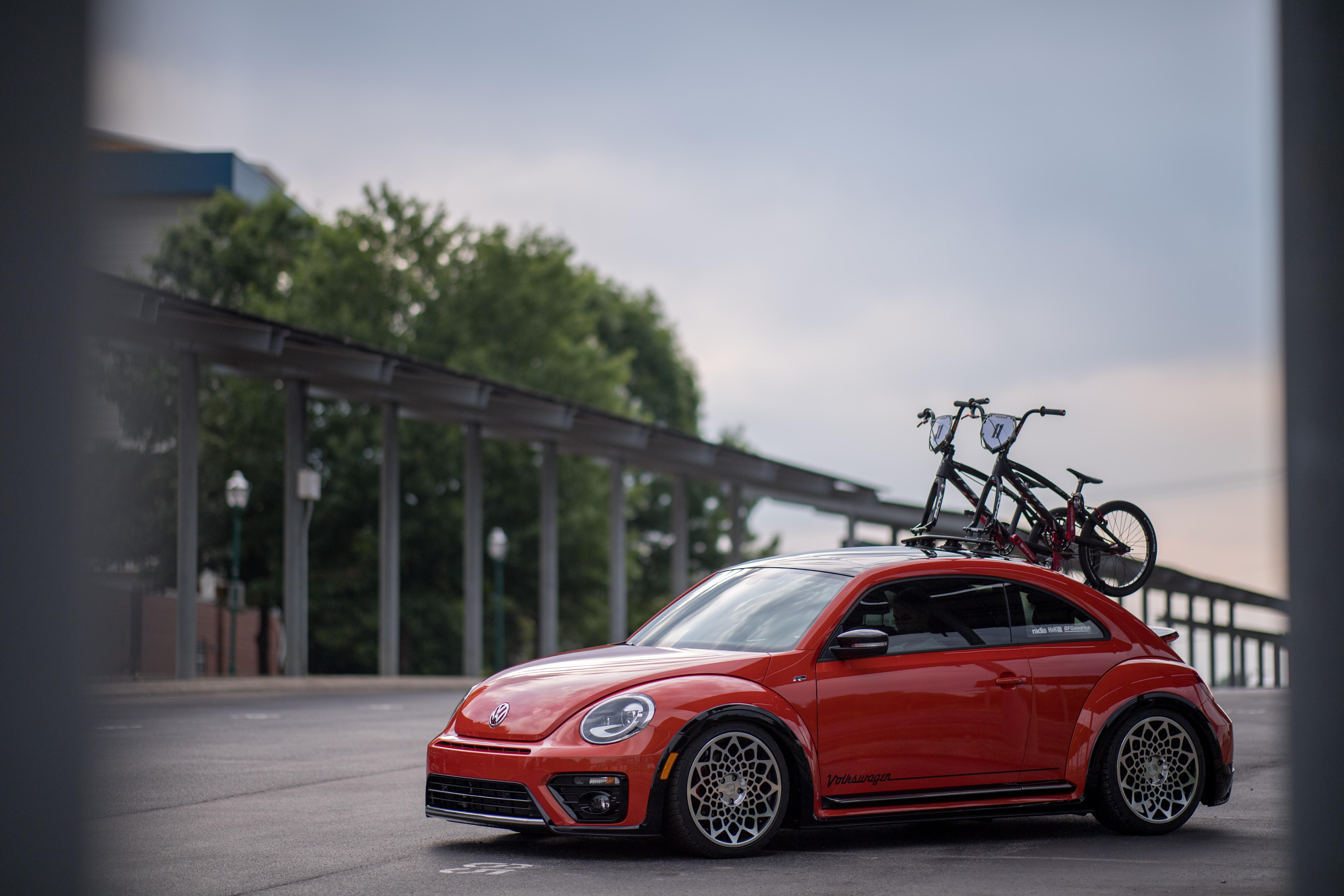 experiential-fleet-shoot-beetle-5801